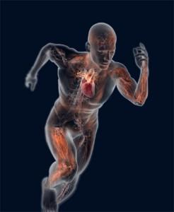 Corpo Humano-Site Corpo e Saúde